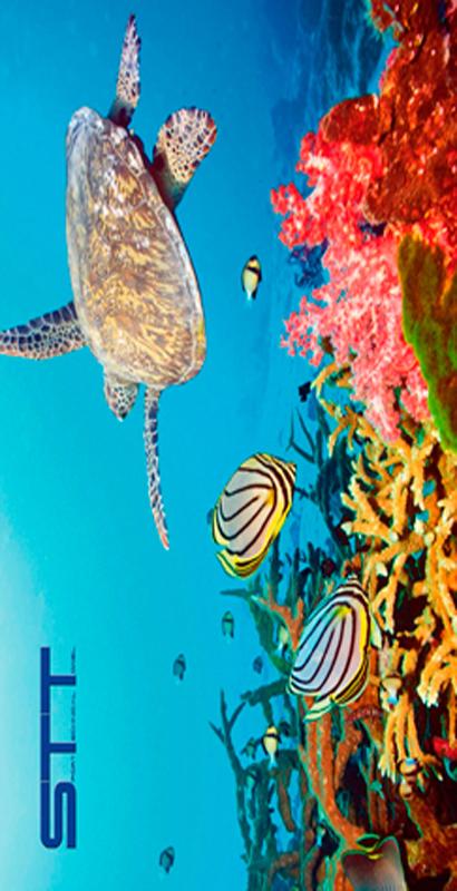 762 Toalla coral