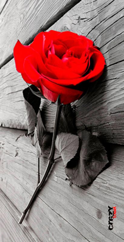 942 Toalla Rose
